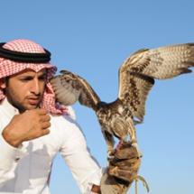 falcon - ____